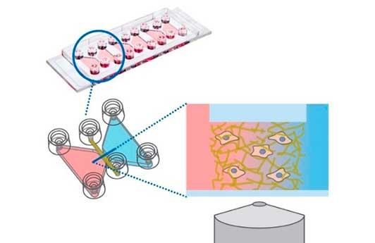 Cámaras de cultivo µ-Slide Chemotaxis