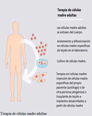 Ensayo basado en células en el incubador