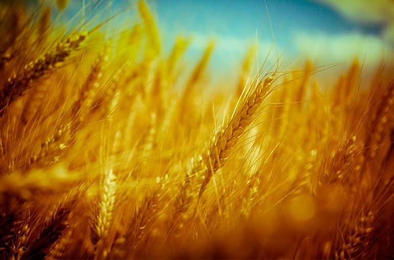 Soluciones para seguridad alimentaria