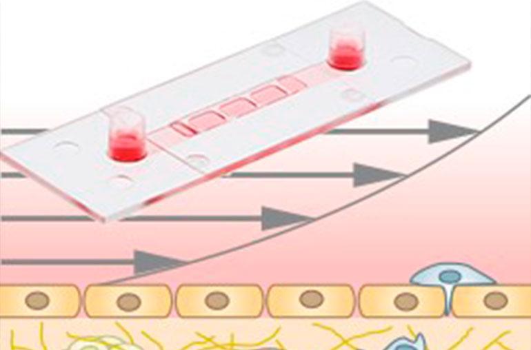 Combinar cultivo celular 3D, ensayos de flujo y microscopía de alta resolución